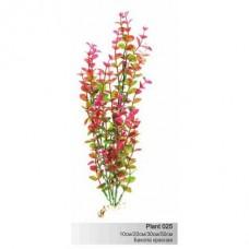 Растение пл. SOBO 10см Plant025/10 бакопа красная